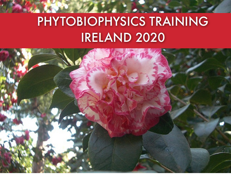 Phytobiophysics Training in Ireland – Spring 2020