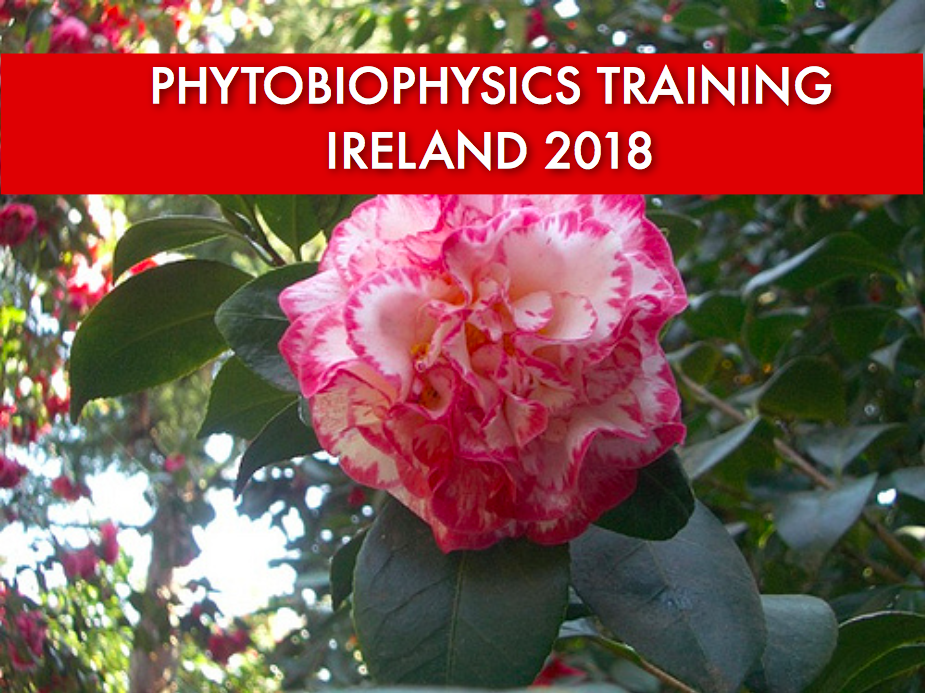 Phytobiophysics Training in Ireland – Winter 2018